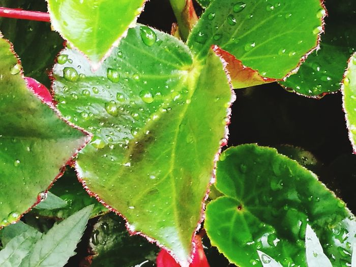 Leaf Nature Green Color Water Close-up Plant Social Issues Drop Beauty In Nature Outdoors Day No People Freshness Growth