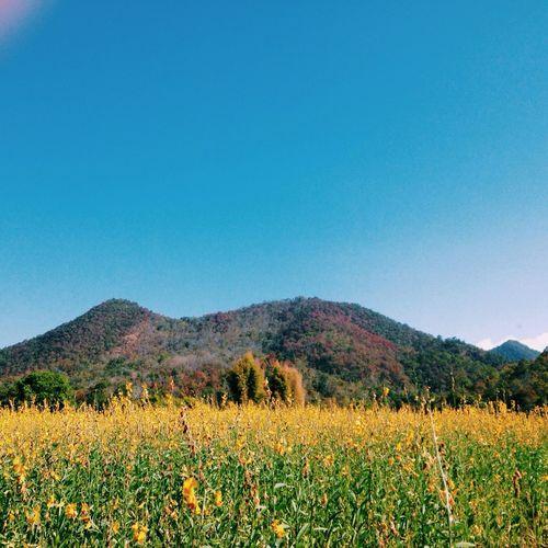 Gardening Beautiful Nature Eye4photography  IPhoneography Travel Photography Traveling Landscape Lovely Weather Yellow
