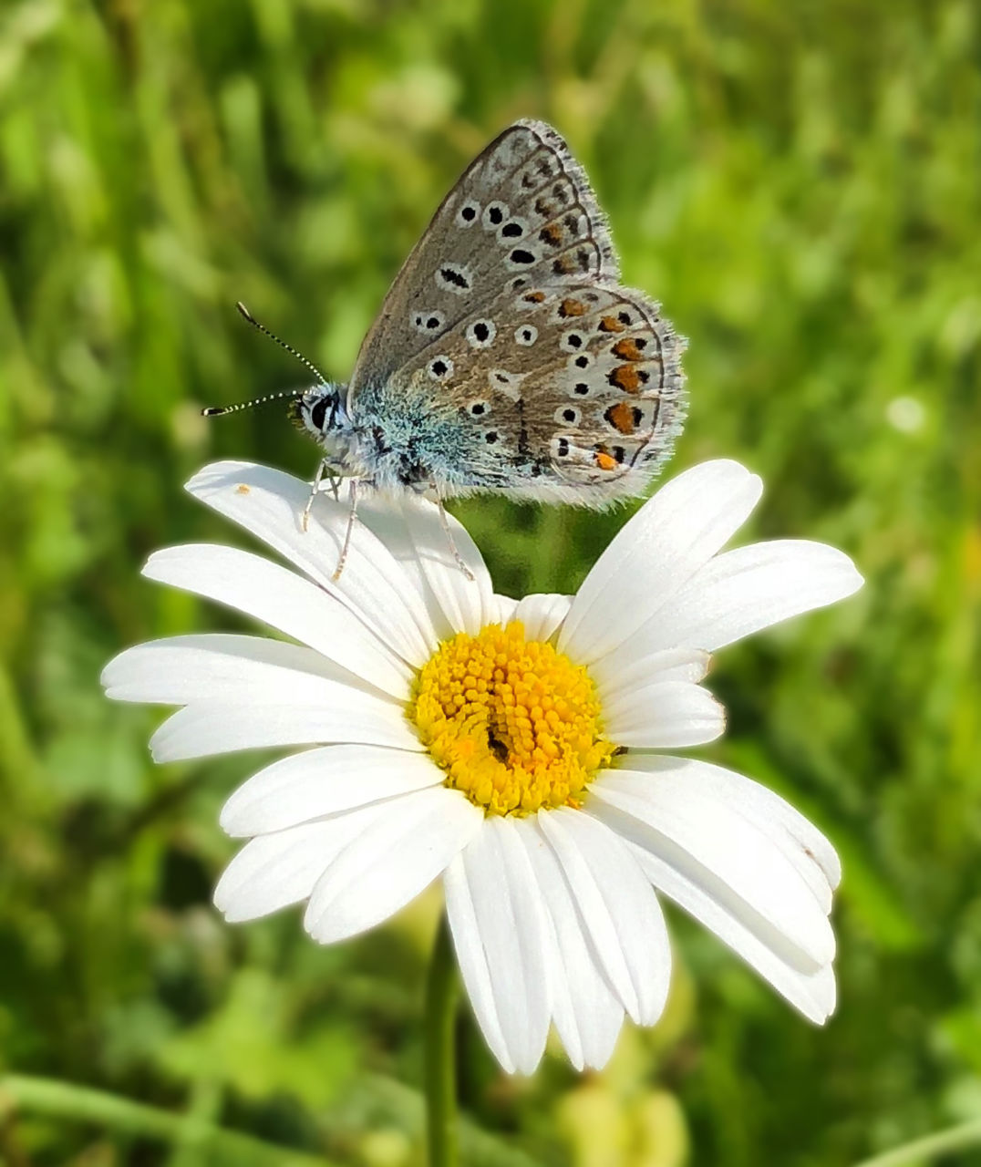flower, flowering plant, insect, plant, beauty in nature, fragility, invertebrate, vulnerability, petal, flower head, animal wildlife, animals in the wild, freshness, animal themes, one animal, growth, animal, inflorescence, animal wing, butterfly - insect, pollen, no people, pollination, butterfly