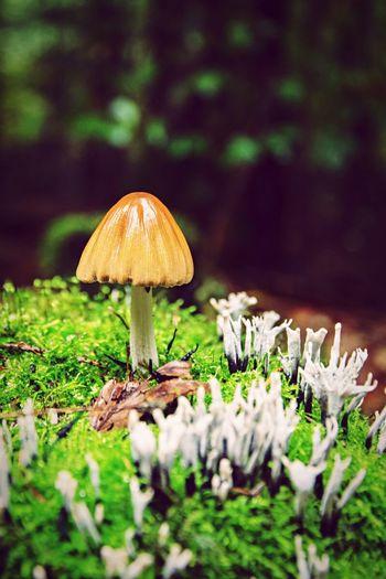 Mushrooms growing on field