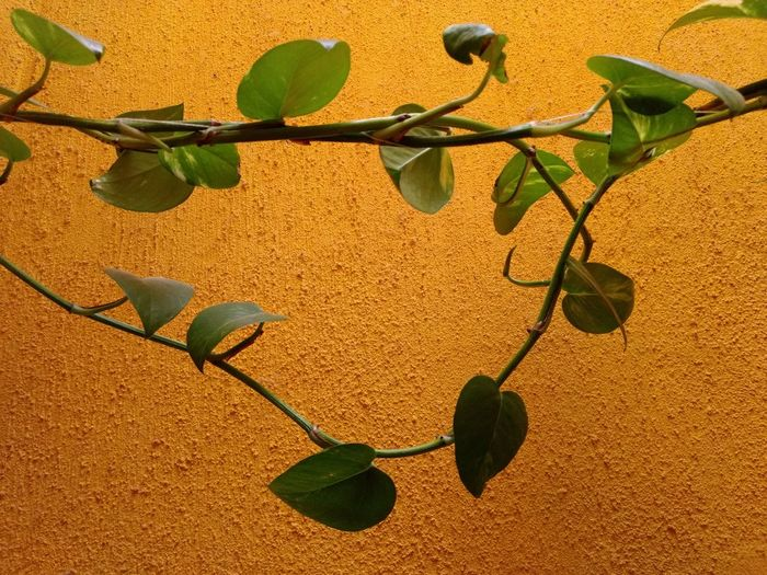 Close-up of plant growing against wall