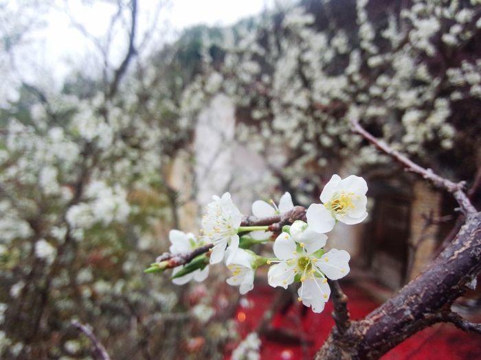 Flowers 春,与花。 First Eyeem Photo