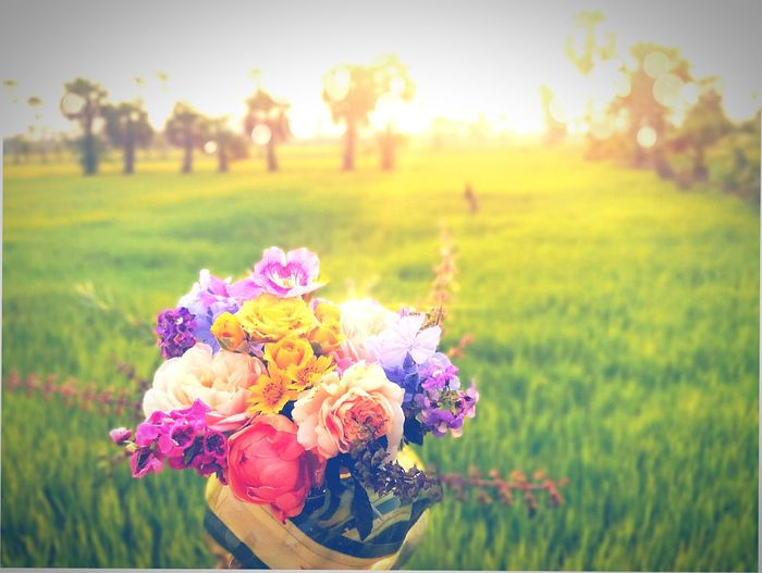 flower bouquet with the green paddy field Love Moment Greenery Scenery Farm Flower Warm Moment Vintage Flower EyeEm Selects Flower Head Flower Multi Colored Rural Scene Sunset Beauty Springtime Summer Bouquet Agriculture Blossom
