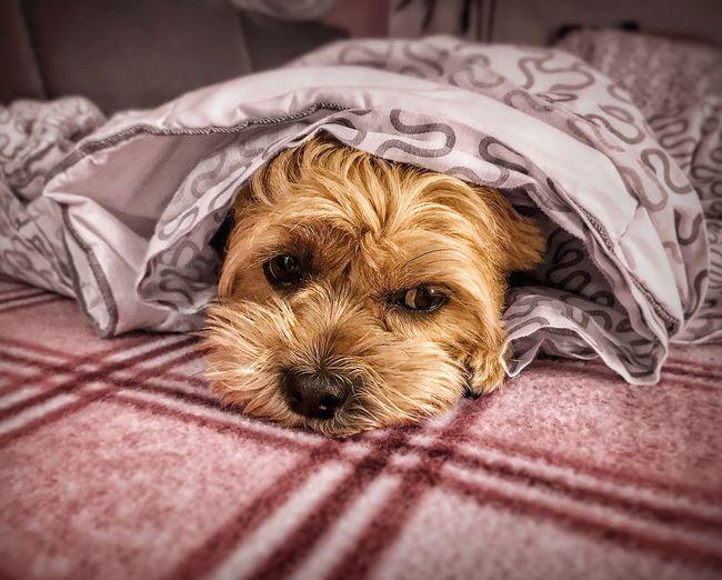 Pets Dog One Animal Animal Themes