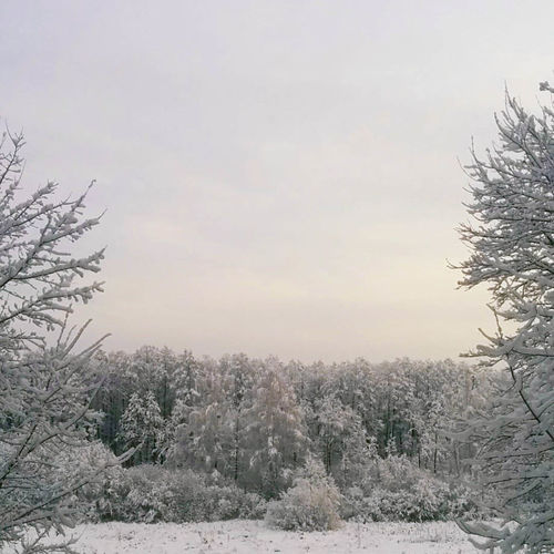 Beauty In Nature Cold Temperature Nature Snow Weather Winter
