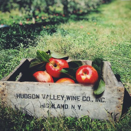 Iphoneonly The Places I've Been Today Taking Photos Apple Picking Enjoying Life IPS2016Nature Iphonephotographyschool Iphonephotoacademy
