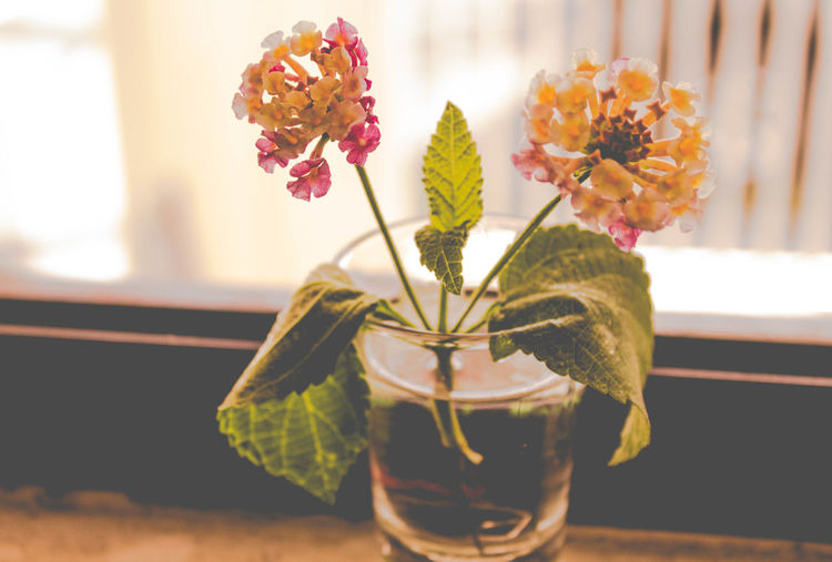 ... Beauty In Nature Close-up Day Flower Flower Head Focus On Foreground Fragility Freshness Growth Home Interior Indoors  Leaf Nature No People Petal Plant Table Vase