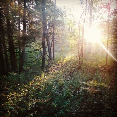 A walk in my woods Naturecalls Woods Enchanted  Sunlight Beautiful LovinLife