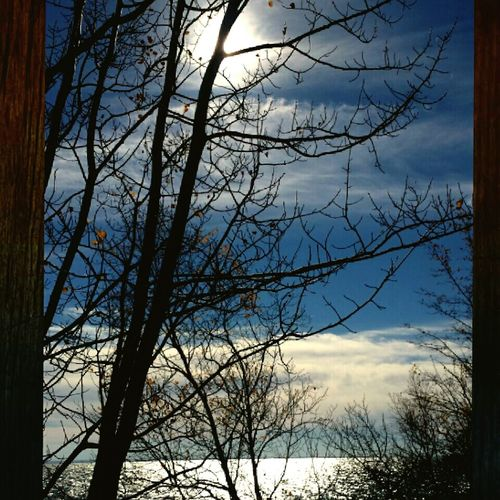 Tranquility Silhouette Sunlight Autumn2016 Autumn Sunbeam Majestic Sky Tree Branch Bare Tree Nature Sky Low Angle View Clear Sky Outdoors No People Beauty In Nature Tranquility Silhouette scenic route, zen, lake, Lake Superior