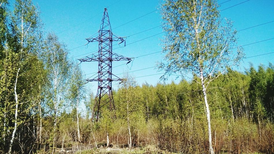 Electricity  Fuel And Power Generation Cable Power Line  Electricity Pylon Tree Power Supply Connection Low Angle View Day No People Growth Technology Blue Outdoors Nature Rural Scene Sky Springtime Tranquility Sunlight 3XSP 3XSPUnity EyeEm 3XSPUnity Russia