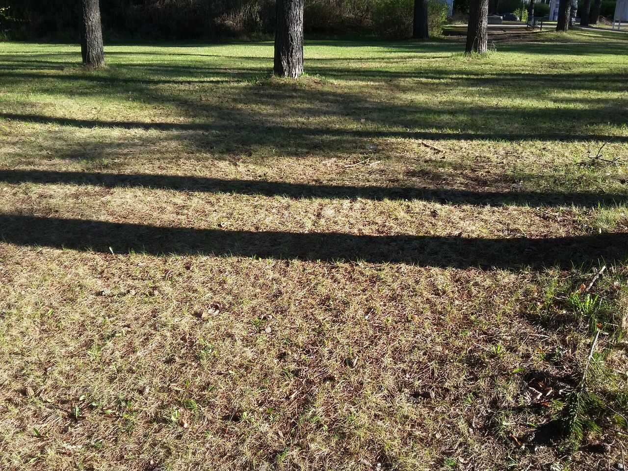 grass, sunlight, shadow, day, nature, outdoors, no people, tree