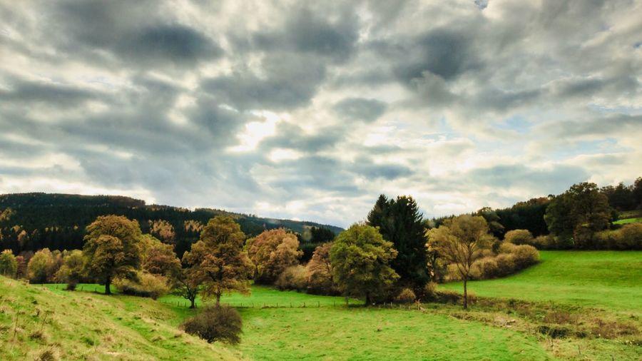 Landschap Hoge