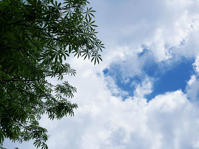 Cloud - Sky Sky Tree Plant Low Angle View Nature Growth Day
