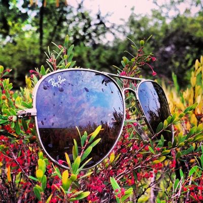 Sunday Funday Rayban Sunglass  Awesome Sun_glass Rainy Clouds Clouds_lover Live_plants Greeny  Garden SamsungS4 Trees Mobilephotography MyPhotography Instapicture Insta_click Insta_creativity Bestoftoday Myworld Fantastic