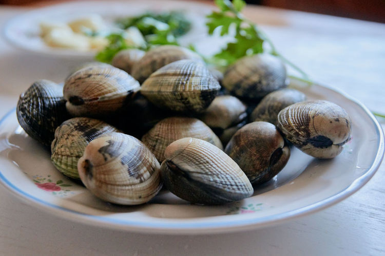 Close-up of shells in plate