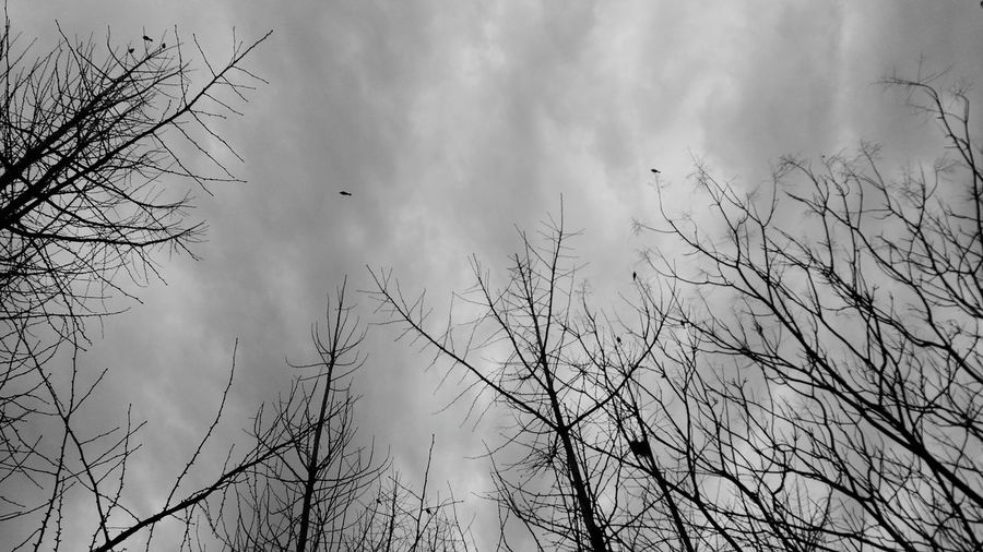 Black And White Birds Clouds And Sky Skyscrapers