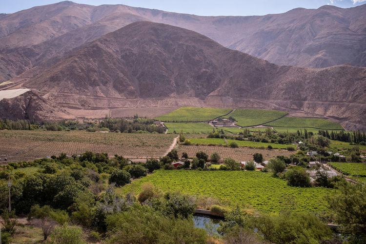 Chile Pisco