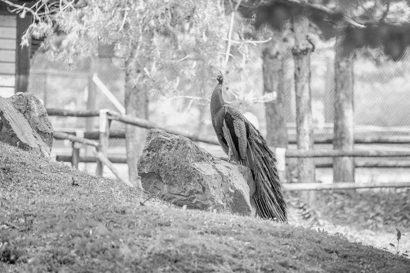Animali allo zoo, Animal Themes Bird Captivity Close-up Day Focus On Foreground Grass Mammal Nature No People One Animal Outdoors Tree Zoo