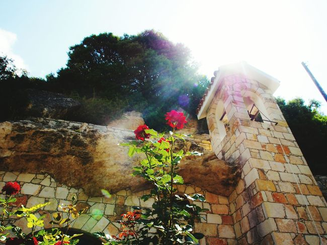 The Adventure Handbook Archeologymuseum Cyprus Church Roses Flower Sun