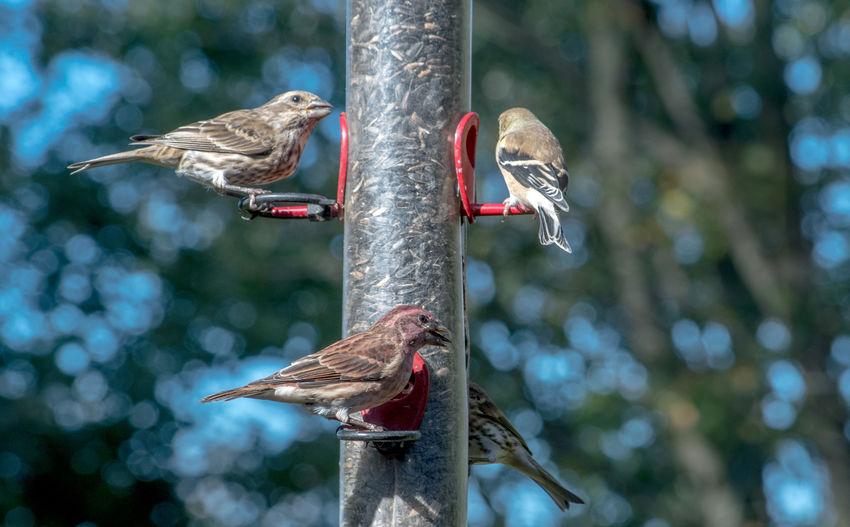 Bird perching on a feeder