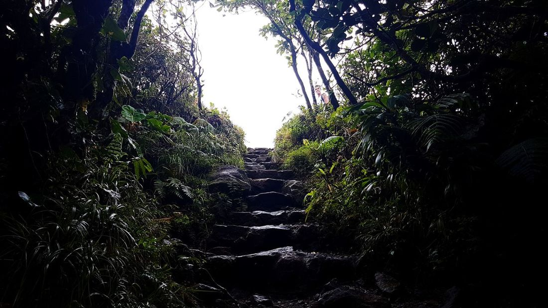 Soufriere Guadeloupe Gwadeloupe Gwada  Sky Outdoors Nature Beauty In Nature Adventure Forest Green Tree Way Way To Heaven Stairs