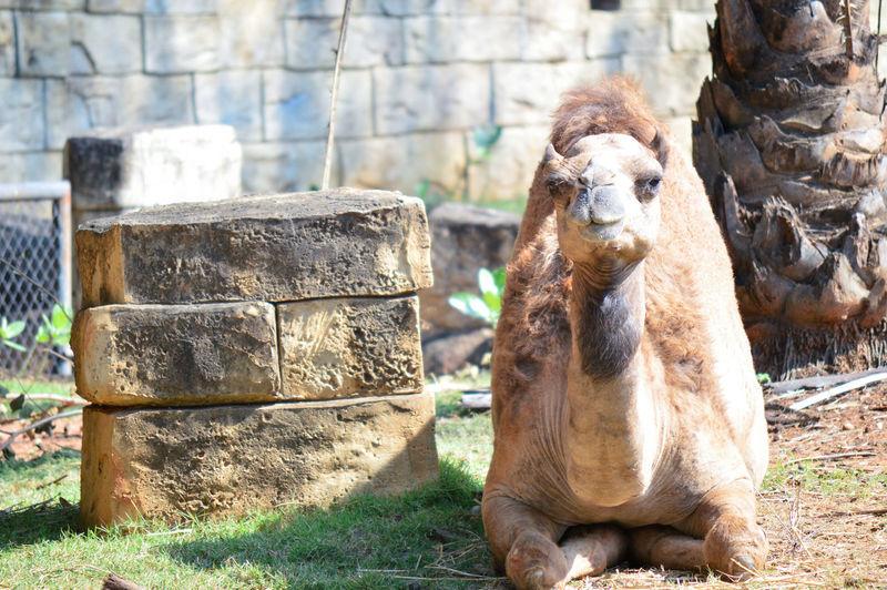Monkey sitting on rock in zoo