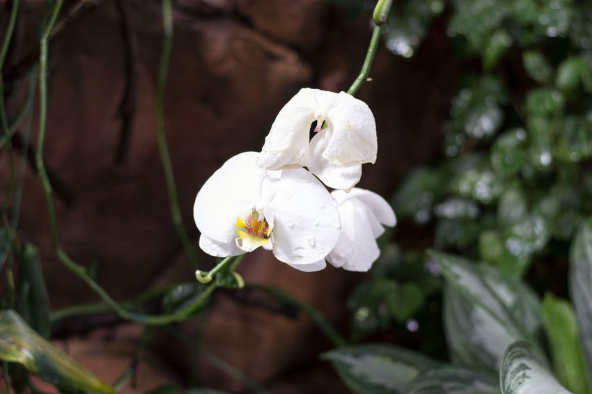 Plant Flower White Color Nature Growth Flower Head Beauty In Nature Petal No People Outdoors Fragility Day Freshness Close-up