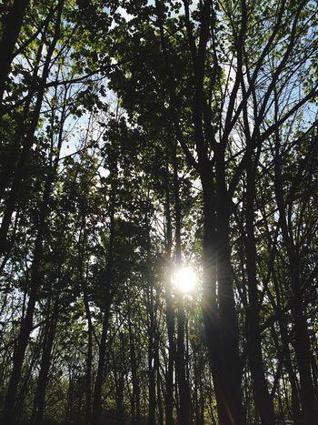Sunthroughthetrees Trees Throughmyeyes The Great Outdoors - 2016 EyeEm Awards Beautiful Day Spring Taking Photos