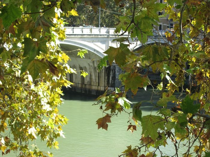 Peeking through the trees at Ponte Umberto I, Roma RM Capital Cities  Italy Ponte Bridge Trees And River Trees River Ponte Umberto I Tiber River Rome Tiber River Rome Italy Rome Plant Tree Built Structure Architecture Day Nature Building Exterior