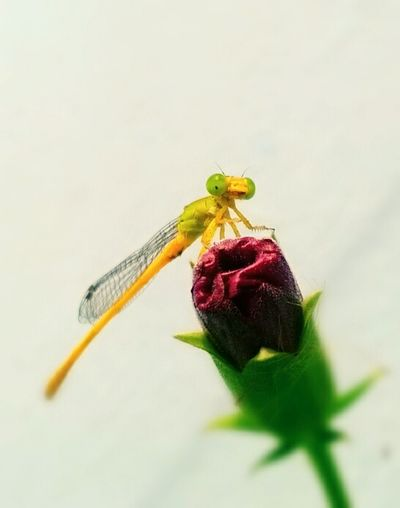 Garden of a single dragon Dragonfly Life Insect Photography Warmth