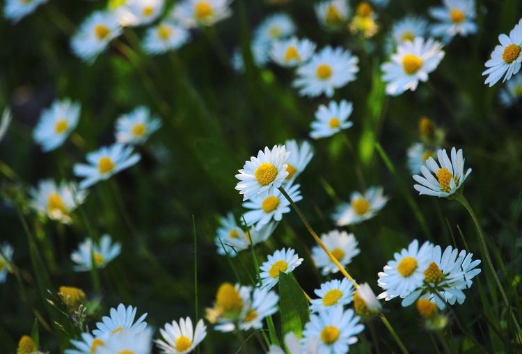 Beautiful Nature ~ Flowering Plant Flower Plant Freshness Daisy Vulnerability  My Best Photo Nature No People Beauty In Nature Petal Day