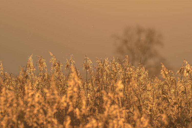 Backlight Grass