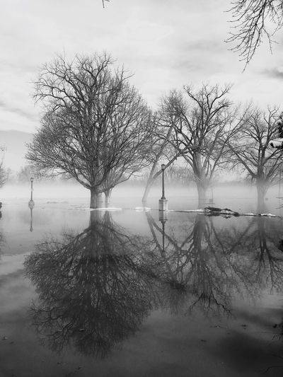 Spring thaw flooding. Bare Tree Tranquility Winter Cold Temperature Tranquil Scene Nature Tree Landscape Beauty In Nature Scenics Day Branch No People Outdoors Water Fog Sky