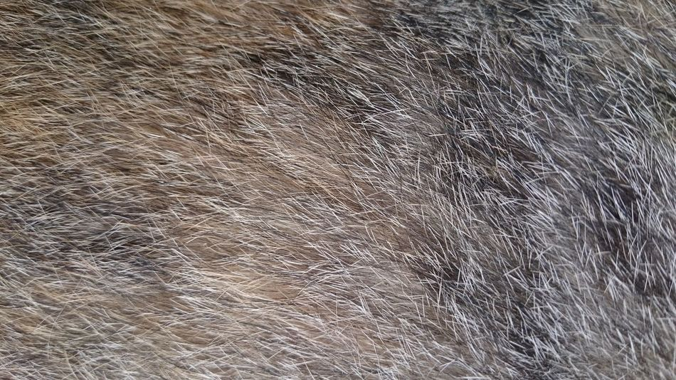 fur of a cat Cat Fur Cats Fur Cats Fur Closeup Backgrounds Full Frame Pattern Abstract Textured  No People Day Close-up Outdoors