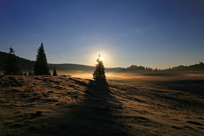 Dawn Light EyeEmNewHere Sunlight Beauty In Nature Early Morning Light Earlymorningphotography Landscape Nature No People Outdoors Pine Tree Scenics Tranquil Scene Tranquility Transylvania💕 Tree #FREIHEITBERLIN