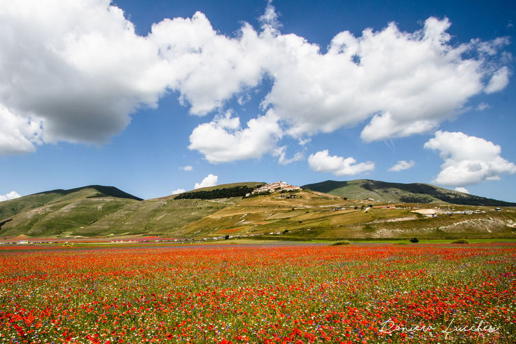 Beauty In Nature Bell'italia Castelluccio Di Norcia Cloud - Sky Day Fioritura Luglio Flower La Fioritura Delle Lenti Landscape Lenticchie Luglio 2016 Mountain Multi Colored Nature Outdoors Panorami D'italia Parco Nazionale Monti Sibillini Prima Del Terremoto Scenics Sky Umbria First Eyeem Photo