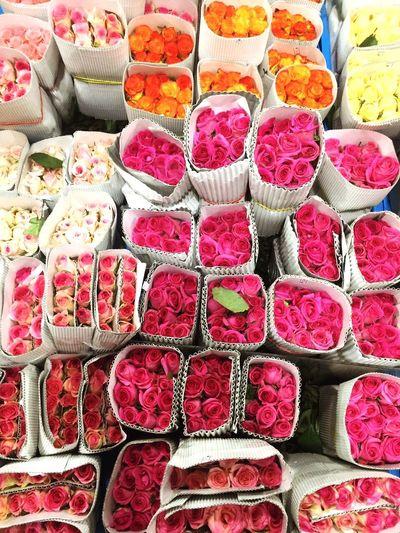 Roses Flower Choice Variation Beautiful First Eyeem Photo