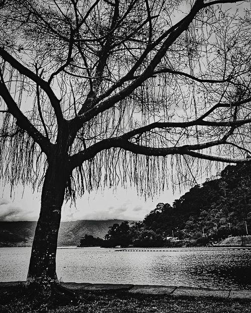 Stand Alone Tree Standalone Deadtree Black Blackandwhite Black And White Black & White Blackandwhite Photography Black And White Photography Black&white Blackandwhitephotography