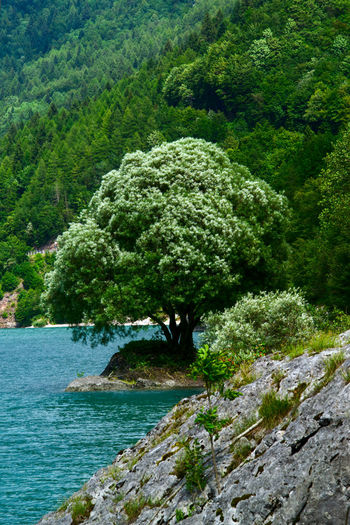 Molveno Lake Lake Lake View Lakeshore Tree Water Plant Green Color Grass