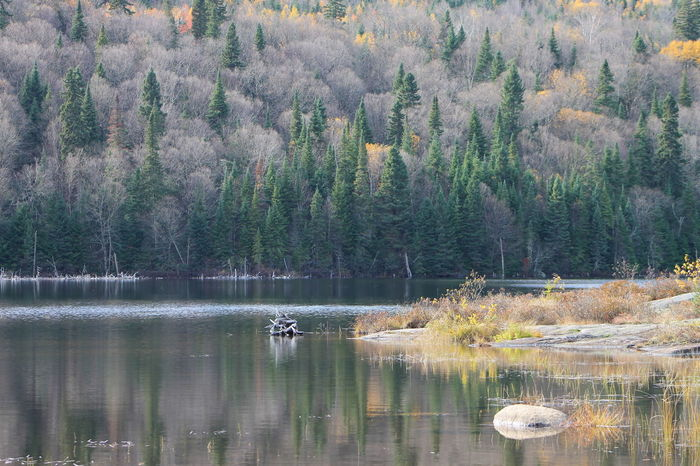 Automne Autumn Beauty In Nature Day EyeEm Nature Lover Forest Growth Lac Des Côté Lake Landscape Lush - Description Nature No People Outdoors Quebec, Canada Scenics Tranquil Scene Tranquility Tree Water Wilderness Area EyeEmNewHere The Great Outdoors - 2017 EyeEm Awards