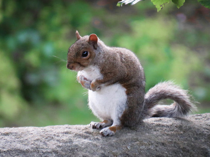 Animal Themes Animal Mammal Rodent One Animal Animal Wildlife Squirrel Animals In The Wild Sitting Rock Outdoors