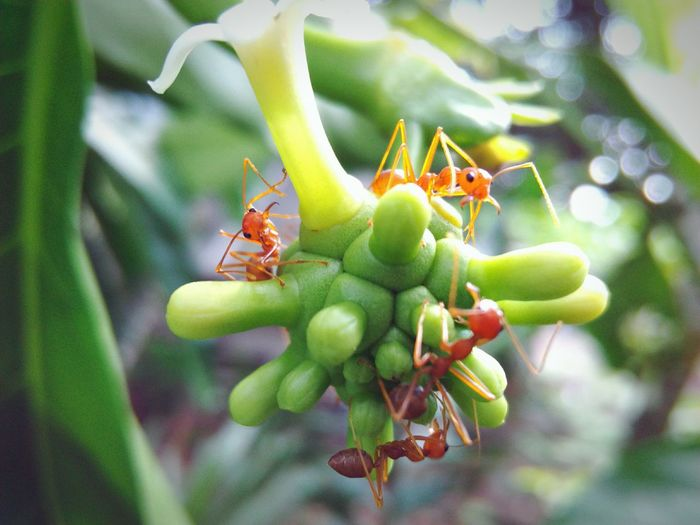 Taking Pictures Ants Ants_life Ants On A Flower Antsphotography Ants Colony Antsworld Showcase July Macro_bugs
