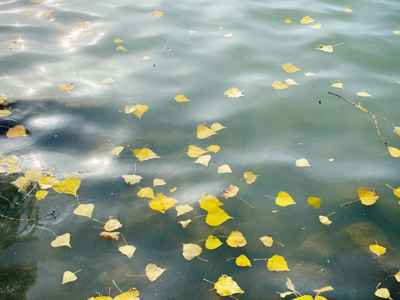 water, lake, high angle view, plant part, leaf, reflection, nature, floating, no people, floating on water, day, waterfront, leaves, outdoors, beauty in nature, full frame, yellow, backgrounds, change, rain