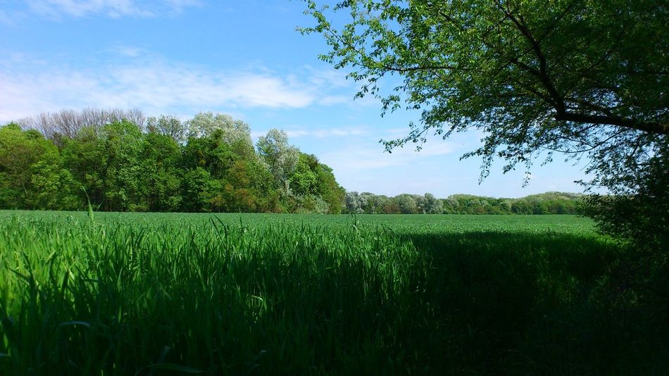 Lobau Austria Löbau Agriculture Beauty In Nature Day Field Grass Growth Landscape Nature No People Outdoors Sky Tree Ymoart