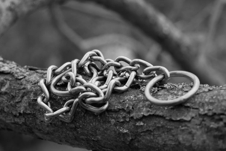 Close-up of chain on tree
