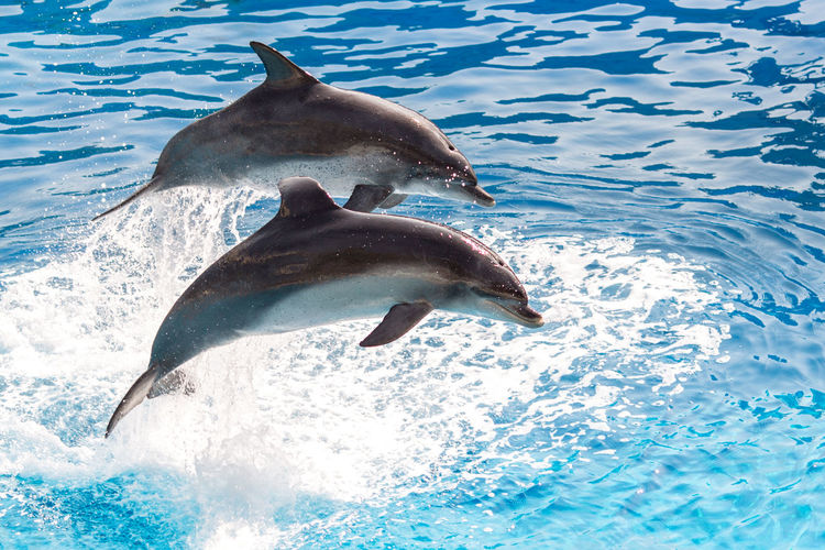 View of dolphin in sea