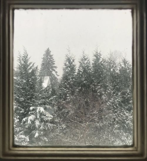 Snow covered trees against sky seen through glass window
