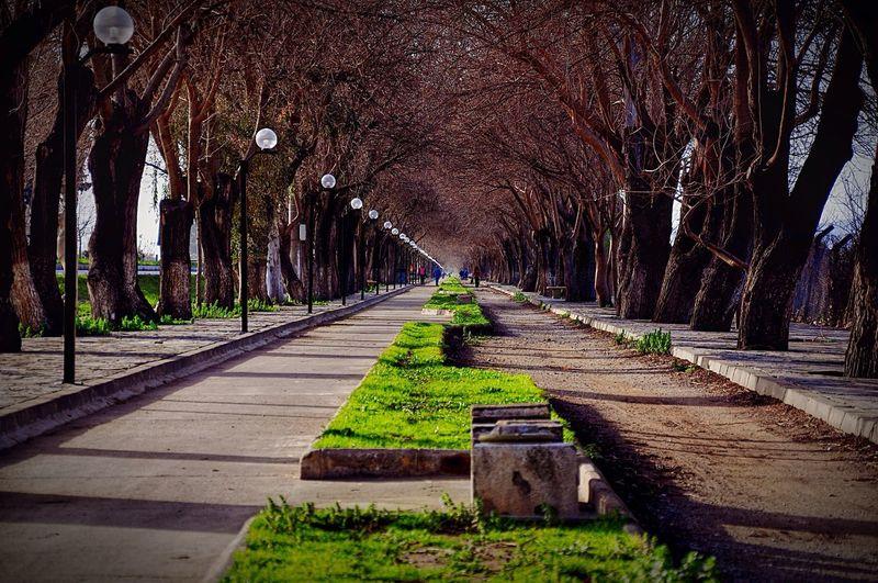 Izmir Ephesus Doğa Nature Park Walking Path Way Beautiful Nature_collection