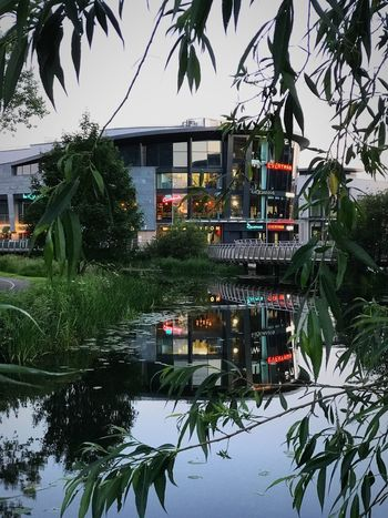 Water Tree Built Structure Plant Architecture Reflection Nature City Building Exterior