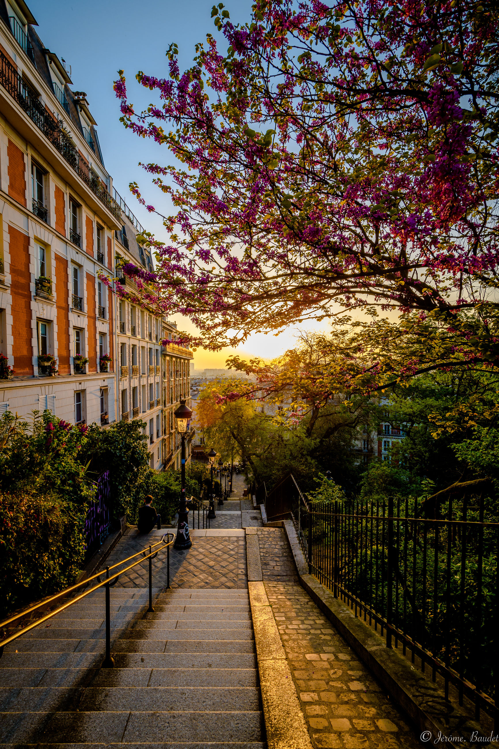 plant, architecture, built structure, tree, nature, building exterior, building, growth, sky, direction, footpath, city, the way forward, sunlight, no people, flower, outdoors, sidewalk, railing, residential district, cherry blossom